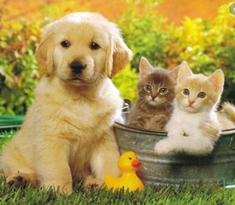 ¿Porqué es tan importante para tus hijos tener un amigo animal?