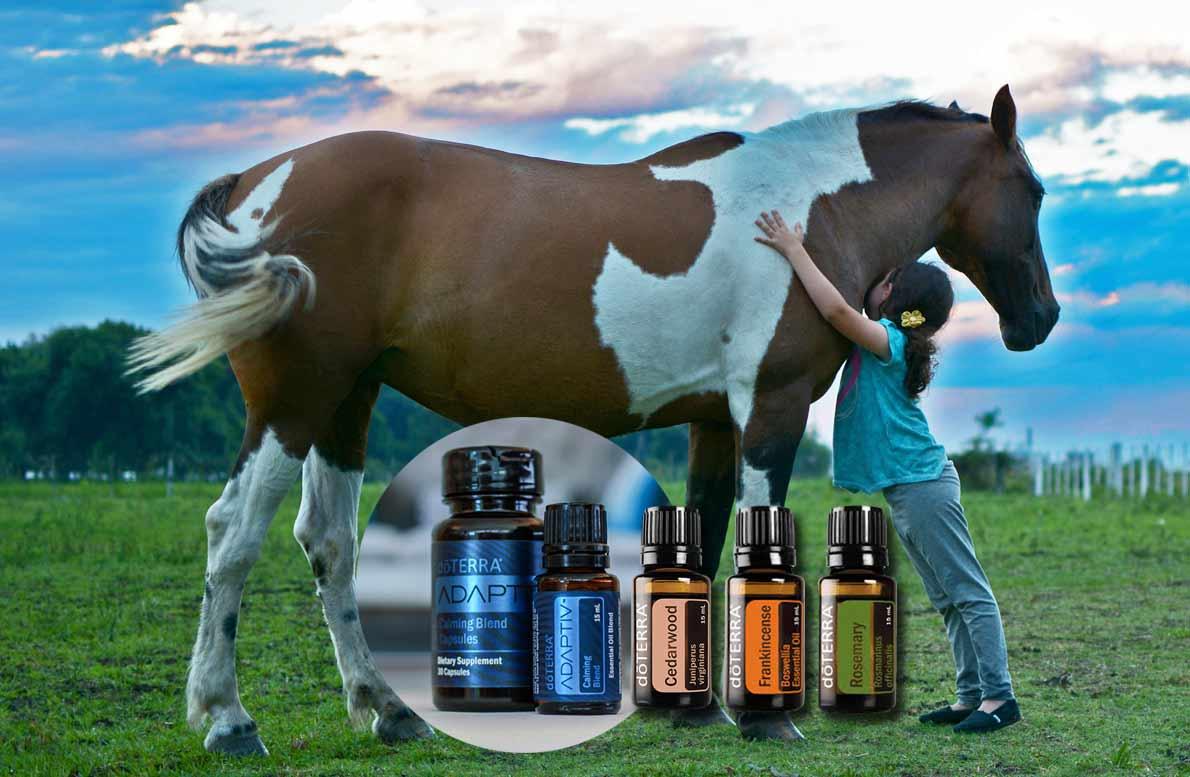 Estimula niños especiales con dōTERRA® y la equino terapía