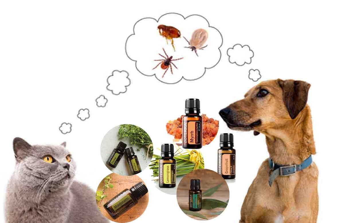 Crea un anti pulgas natural para tu mascota con estos 8 aceites dōTERRA®