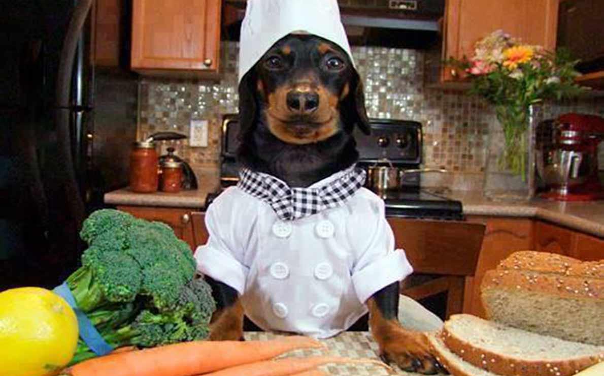 Ebook muffins, cookies, cocina y recetas para mascotas